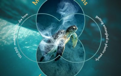 More plastic, less marine life